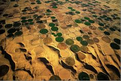 earth from above - An oasis in Algeria