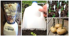 15 Gardening Hacks For A Greener Thumb | Diply