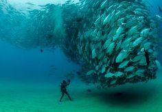 """Fotos de oceanosempre nos surpreendem. Seja pela combinação incrível de cores, a iluminação gerada pelos raios de luz natural ou simplesmente a incrível diversidade de peixes. Peixes, inclusive, os protagonistas dessa série. Mas de um modo bastante pitoresco. Não foi nada fácil. O fotógrafo americano Octavio Aburto acumulou anos de trabalho para descobrir um modo de encontrar peixes formando uma espécie de tornado. """"Foi mais sorte do que estudo. Errei várias tentativas até localizar essa…"""