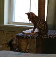Jackyl and Kona