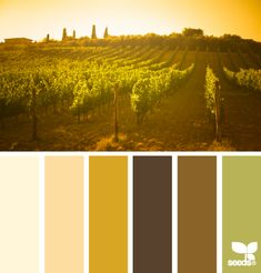 Vineyard Hues - all I can imagine is the golden hues of sunrise, the warmth of the sun, and the hot smell of summer on the vines. It's like being in Tuscany