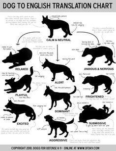 Dog to english translation chart. http://dogcoachinggenius.com/category/dog-training-obedience/ #DogObedienceTipsandAdvice #DogObidience #CoolDogObedienceTips