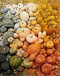 Martha Stewart pumpkins #pumpkins #gourds #squash #martha_stewart