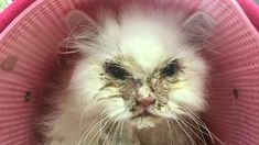 Кота по кличке Джон Сноу везде советовали усыпить