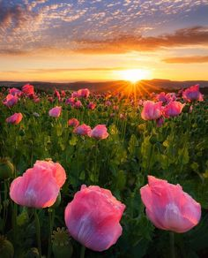 sunrise and poppies Images Cools, Beautiful Sunrise, Amazing Nature, Nature Photos, Nature Nature, Belle Photo, Pretty Pictures, Amazing Photos, Beautiful Landscapes