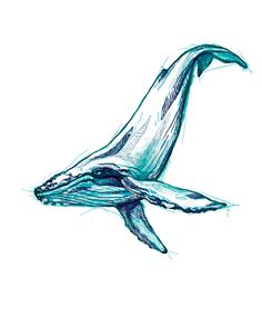 humpback whale on Behance More
