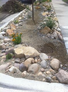 dry river bed parkstrip