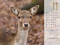 November - Kalender 2016 - Tiere