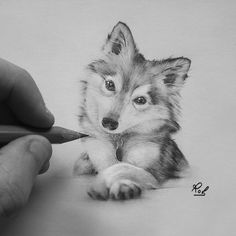 Animal Drawings in Black and White Charcoal Portraits Curious Puppy. Animal Drawings in Black and White Charcoal Portraits. By Roberto Matteazzi. Pencil Drawings Of Animals, Animal Sketches, Art Drawings Sketches, Puppy Drawings, Husky Drawing, Drawing Art, Drawing Tips, Drawing Techniques, Realistic Drawings