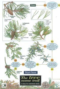 tree identification | Tree Identification Photos 24363