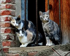 les chats de Mosset, FR