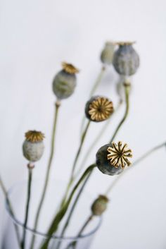 poppy seed heads | ©My Second Hand Life - Part 20