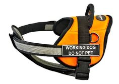 Dean  Tyler 28Inch to 38Inch Working Dog Do Not Pet Harness with Padded Reflective Chest Straps Medium OrangeBlack *** Check out the image by visiting the link.(This is an Amazon affiliate link)