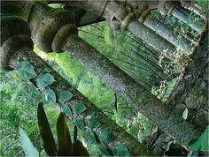 Las Pozas - a surreal garden in the rainforest of San Luis Potosi, #Mexico