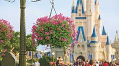 You'll find beautiful hanging baskets and more than 30 million blooms at the annual Epcot International Flower Container Plants, Container Gardening, Gardening Tips, Lavender Flowers, White Flowers, Chenille Plant, Ivy Geraniums, Hanging Flower Baskets, Hanging Plants