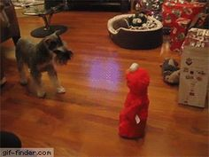Dog Meets Elmo | Gif Finder – Find and Share funny animated gifs