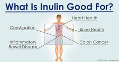 Inulin, a water-soluble prebiotic fiber, has been found to offer many health benefits to our body including diabetes, bone health, constipation and more. http://articles.mercola.com/sites/articles/archive/2016/03/07/inulin-health-benefits.aspx