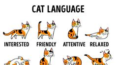 Cat behavior chart cat tail signs,different body language how do you know if a cat is happy,how to say i love you in cat language what does it mean when your cat. Cute Cats, Funny Cats, Cat Years, Cat Body, Cat Behavior, All About Cats, Understanding Yourself, Pet Care, Cats And Kittens