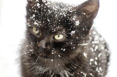You can keep cats warm through the winter—even if they never come inside the house. Let's dive into the four steps you can take to keep outdoor cats warm. Outdoor Cat Shelter, Outdoor Cats, Merry Christmas, Christmas Cats, Christmas Holidays, Christmas Decorations, Cat Shelters For Winter, Dog Igloo, Winter Cat
