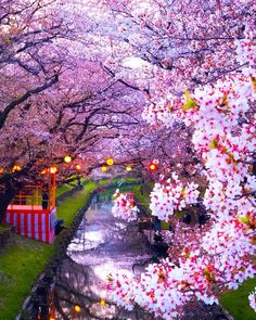 Cherry blossoms at Shingashigawa river & Saitama, Japan. Photos by The post Cherry blossoms at Shingashigawa river appeared first on . Beautiful Places To Visit, Wonderful Places, Beautiful World, Cherry Blossom Japan, Cherry Blossoms, Saitama Japan, Japan Photo, Tree Photography, Blossom Trees