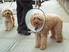 Look at this smug dog smiling to himself about his friend's troubles...