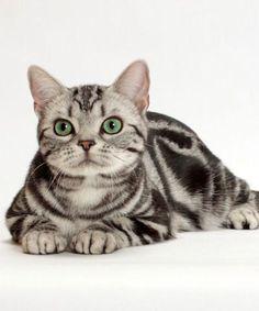 Cat eyes.