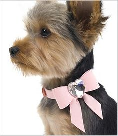Add a bow to your dog's collar. Perfect for dogs that can't/won't wear hair bows.