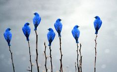 They look like little garden stake ornaments!