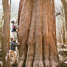 A paddling trip through the primeval landscape of South Carolina's Congaree River reveals some of the region's most magnificent trees