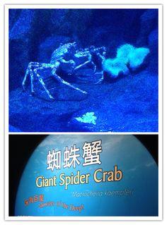 2014.01.04 Giant Spider, Ocean Park