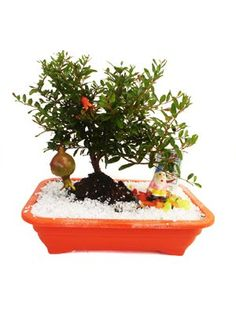 Flores e Plantas - Steltenpool: Bonsai
