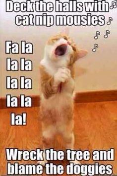 Cat singing a Christmas carol funny