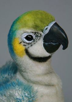 K Pawz OOAK Artist Baby Blue and Gold Macaw Parrot
