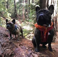 A beautiful scenic trail. Funny Dog Images, Funny Dogs, Outside Dogs, Outdoor Dog, French Bulldogs, Dog Mom, Best Dogs, Dogs And Puppies, Your Dog