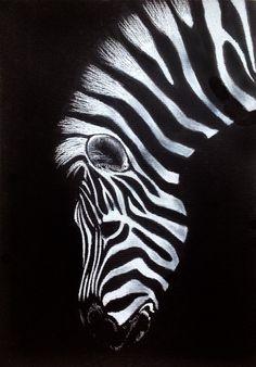 Zebra – drawing on black paper . Zebra – drawing on black paper Zebra Kunst, Zebra Art, Zebra Drawing, Black Paper Drawing, White Art, Black Art, White White, Animal Drawings, Art Drawings
