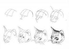 Image result for cat anatomy drawing