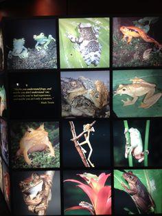 Photo montage at the Georgia Aquarium in Atlanta