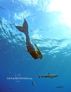 Dana Marie: Mermaid of the Sea! Learn more about this amazing and genuine woman who created a #mermaid fin to experience the ocean!  http://sutralifestyles.com/dana-marie-mermaid-of-the-sea/#