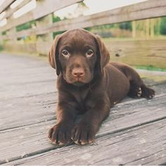 Gorgeous puppy! Great photo  thank you for sharing❤️