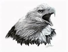 Home Original Artwork Eagle Head Study in Graphite