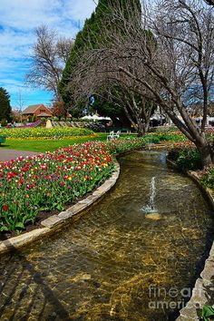 Beautiful Tulip Gardens Photograph by Kaye Menner