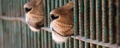 Diritti degli animali violati al circo