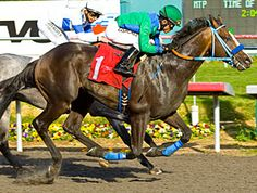 Empire Way(2009)Empire Maker- Delta Princess By A.P. Indy. 4x4 To Northern Dancer, 4x5 To In Reality, 5x5 To Buckpasser. 12 Starts 1 Win 1 Second. $119,170 Ran 2nd 2012 Robert Lewis(G2). Full Brother To Royal Delta.
