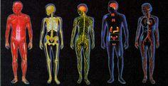 O corpo humano é tudo o que compõe o ser humano. Conheça tudo sobre o corpo humano, incluindo a sua anatomia, factos e funções.