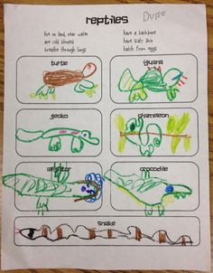 reptile activities for kids   Displaying (20) Gallery Images For Examples Of Amphibians For Kids...
