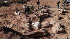 Diva Dea Weag / fósiles : Hallan el ''Dinosaurio?? màs grande jamas descubierto.(La mediciòn de su fèmur es un buen patron para estimar que es el Dinosaurio màs grande descubierto)Un grupo de paleontòlogos anunciò el descubrimiento bajo suelo Argentino de la ''criatura màs grande que ha caminado sobre la tierra.Se estima que este gigantesco Dinosaurio era de unos 40 metros de largo por 20 de alto....