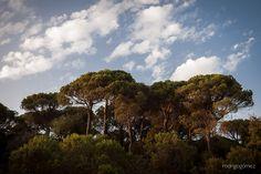 """Inicio de una pequeña serie """"Lost in the woods"""" en el Parque del Montseny, Catalunya"""
