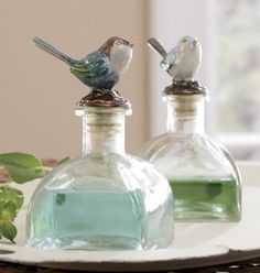 birds on anything!