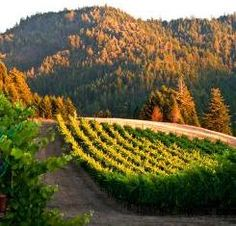 Anderson Valley Road Trip Fine wines, delicious eats, friendly people, great outdoors. Find all that and more in California's charmed Anderson Valley.
