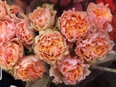"""""""Campanella Peach"""" beauties from Alexandra Farms. January Flower, Coral Colour Palette, Orange Wedding Colors, Flower Chart, Rose Garden Design, Types Of Flowers, Cut Flowers, Flower Market, Flower Decorations"""